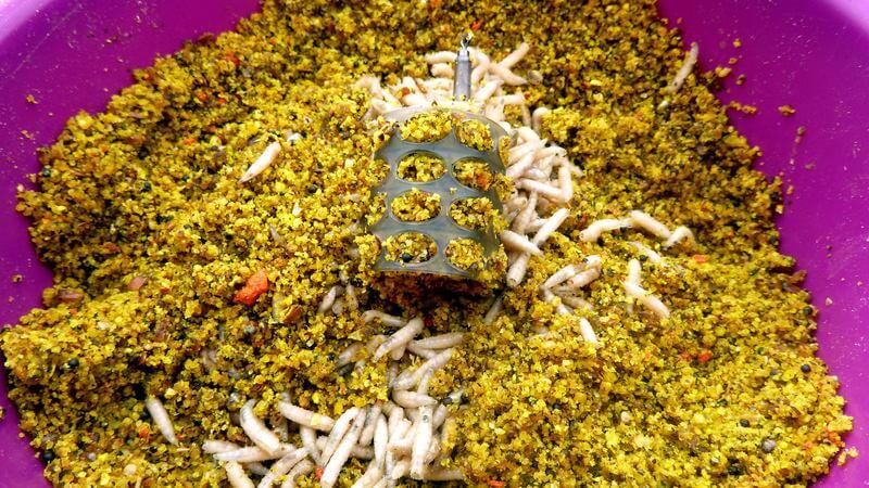 Cage Feeder aus Plastik in einer Schale mit Maden