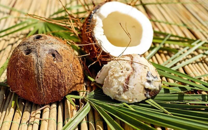 Die Copra Melasse wird aus der Kokosnuss hergestellt
