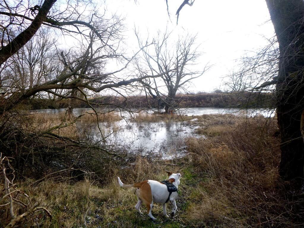 Erkundungstour mit Hund für neue Angelgewässer