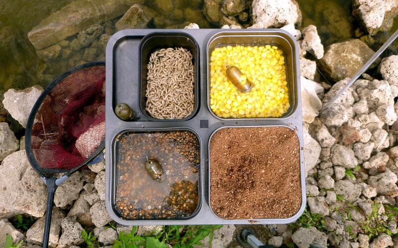 Futter und Köder für Rotaugen