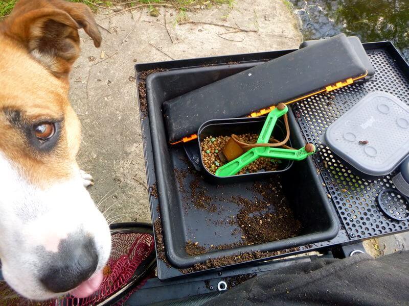 Hunde lieben das Lockfutter, vorsicht ist beim Angeln also geboten