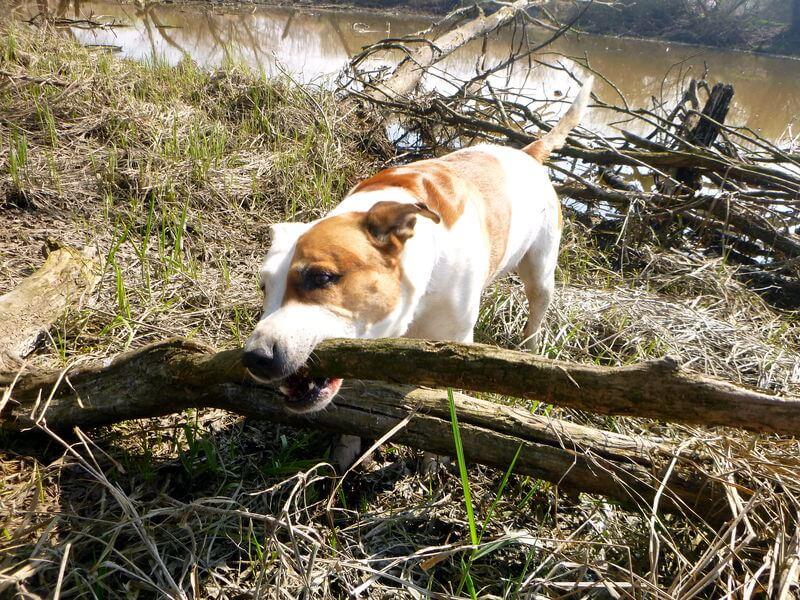 Hunde wollen sich auch beim Angeln beschäftigt wissen