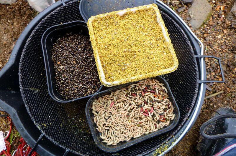 Lockfutter mit Hanf und Maden auf einem Eimer