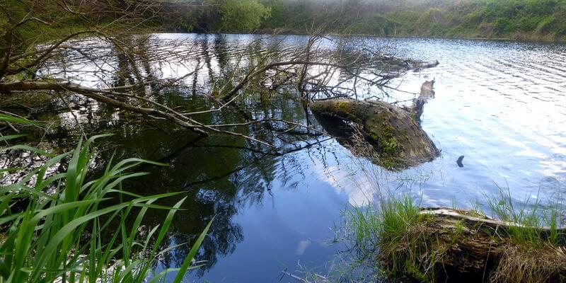 Teiche sind oft von Schleien besiedelt