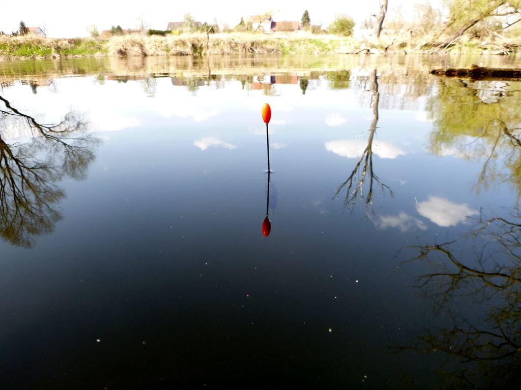 Wagglermontage steigt nach einem Hebebiss der Rotfeder aus dem Wasser