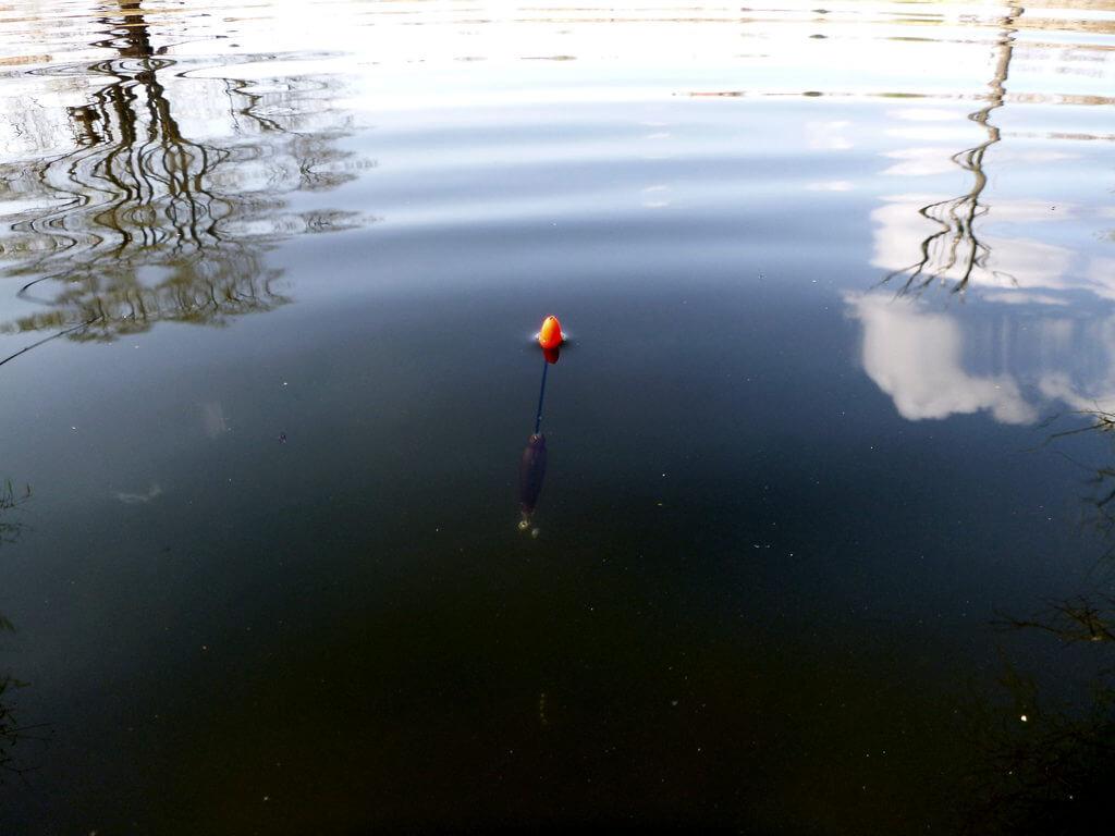 ausgebleiter Waggler im Teich