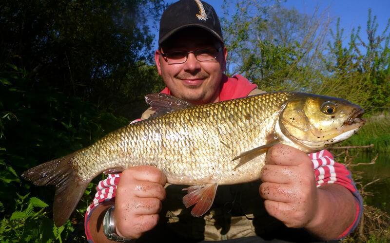 gefangener Döbel eines Anglers
