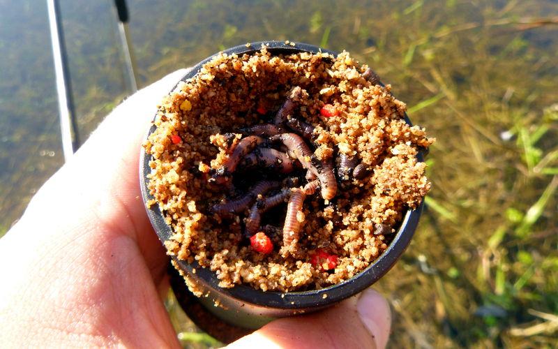 geschnittene Würmer für Ansitz auf Schleien