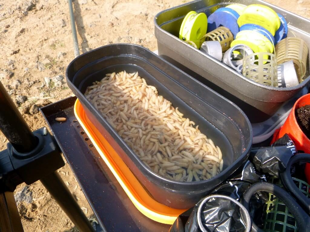Köderdose gefüllt mit Wasser und tote Maden