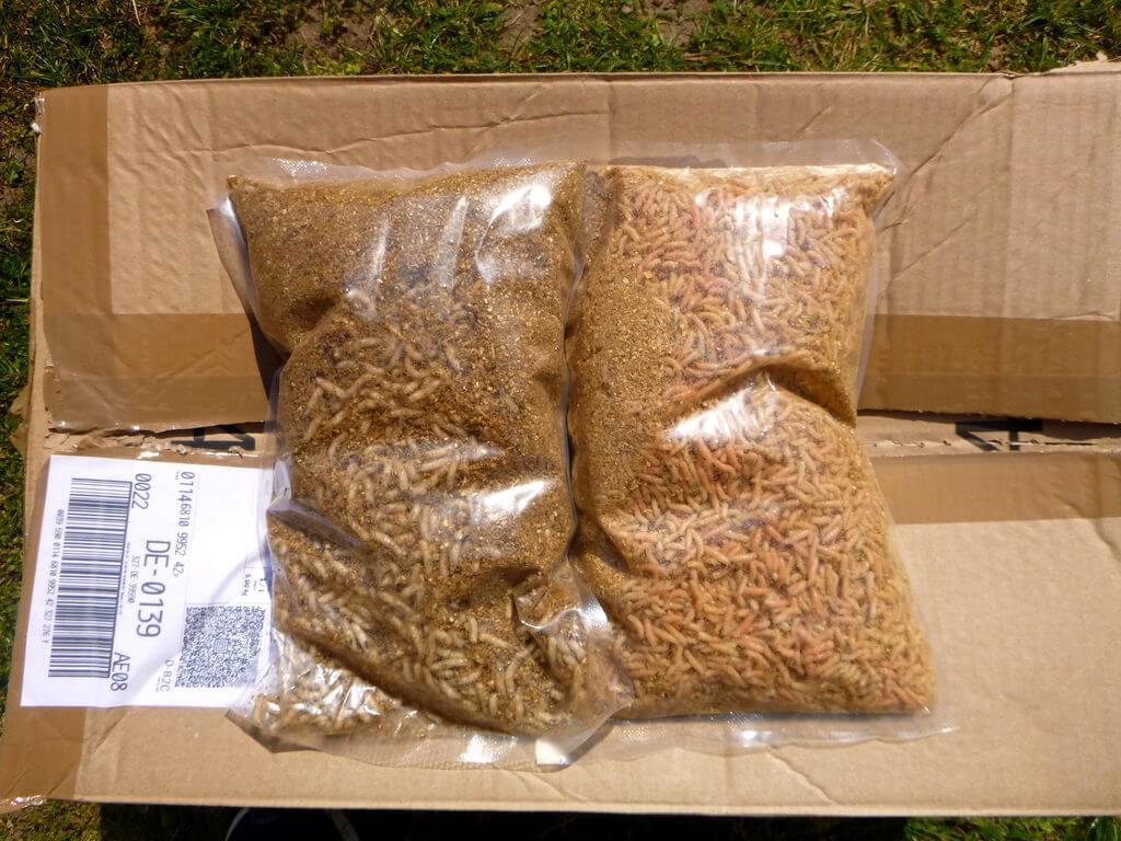 Online gekaufte Maden werden im vakuumierten Beutel ausgeliefert