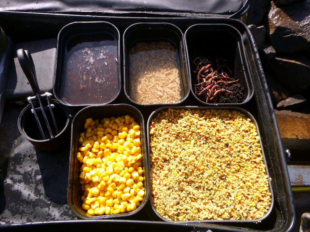 Würmer, Mais, Futter und Schere zum Angeln